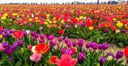 Lale Baharında Konya