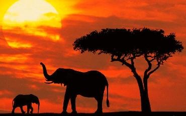 Kenya'da Safari Zanzibar'da Deniz Turu