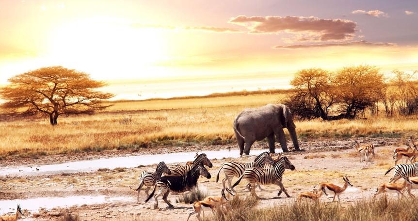 Yılbaşında Cape Town & Afrikada Nehrinden Safari