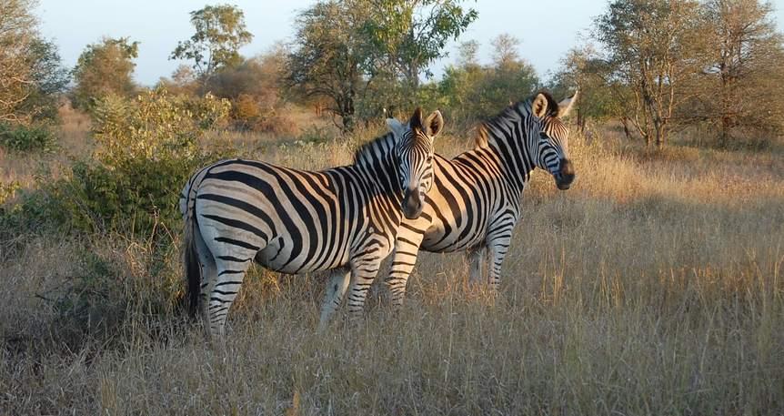 Güney Afrika ve Kruger Park Safarisi