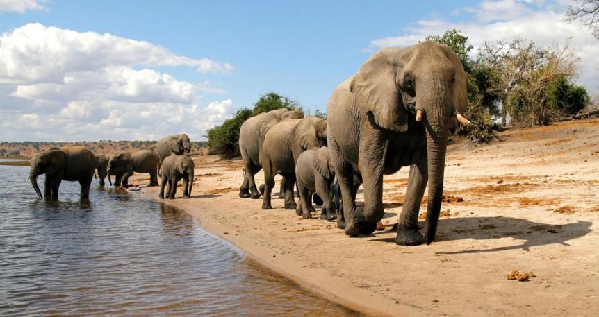 Afrika'da Nehirden Safari